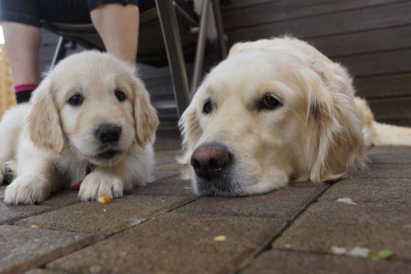 Hummel & Nash